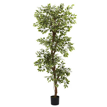 6' Variegated Silk Ficus Tree