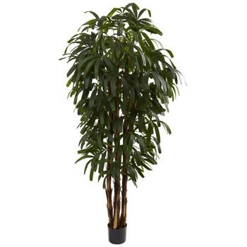 6' Silk Raphis Palm Tree