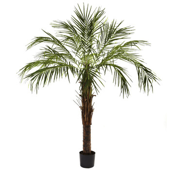 6' Robellini Silk Palm Tree