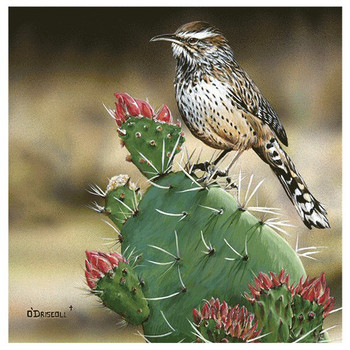 Cactus Wren Bird Absorbent Beverage Coasters by Driscoll, Set of 8