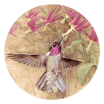 Winged Jewel Hummingbird Sandstone Beverage Coasters, Set of 8