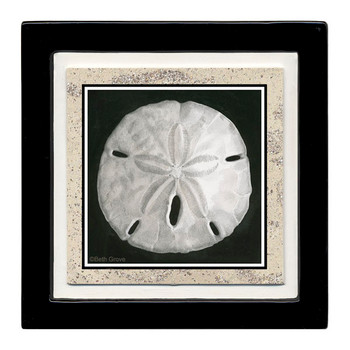 Sand Dollar Beverage Coasters, Set of 8