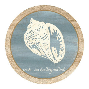 Imperial Conch Shell Sandstone Coasters by Z. Studios, Set of 8