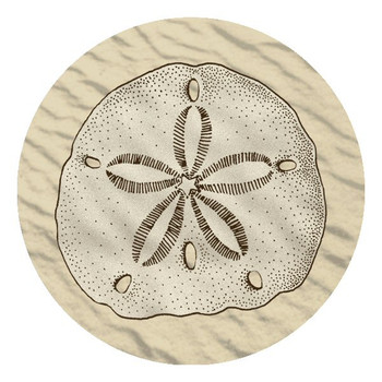 Sand Dollar Absorbent Beverage Coasters, Set of 12
