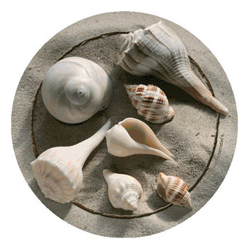 Shells Absorbent Beverage Coasters by Bill Philip, Set of 12