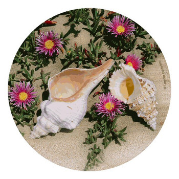 Shells and Flowers Beverage Coasters by Londie Padelsky, Set of 12
