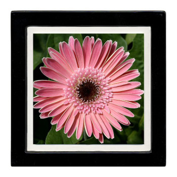 Gerber Daisy Flower Beverage Coasters, Set of 8
