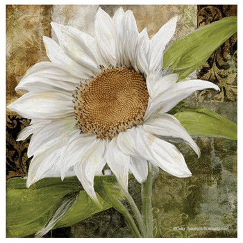 White Sunflower Absorbent Beverage Coasters by Color Bakery, Set of 8