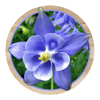 Columbine Flower Sandstone Beverage Coasters, Set of 8