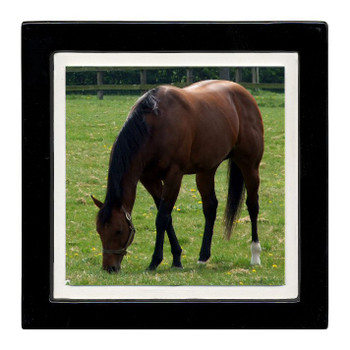 Out to Pasture Horse Beverage Coasters, Set of 8