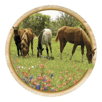 Yearling Horses and Wildflowers Coasters by Cindy McIntyre, Set of 8