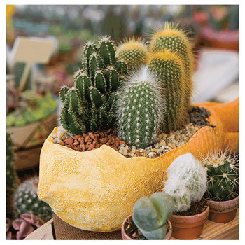 Cactus Flower Pots Absorbent Beverage Coasters, Set of 8