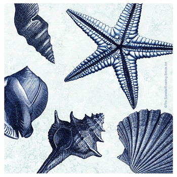 Shell Toss Beverage Coasters by Tre Sorelle Studios, Set of 8
