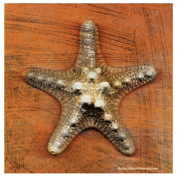 Armored Starfish Absorbent Beverage Coasters by John Golden, Set of 8