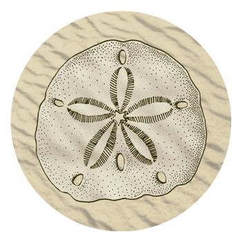 Sand Dollar Absorbent Round Beverage Coasters, Set of 8