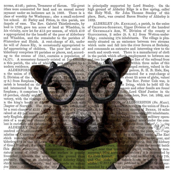 Intelligent Sheep Print Absorbent Beverage Coasters, Set of 12