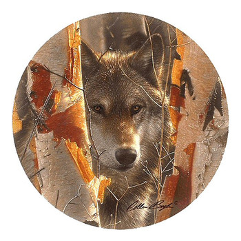 Birch Wolf Sandstone Beverage Coasters by Collin Bogle, Set of 8
