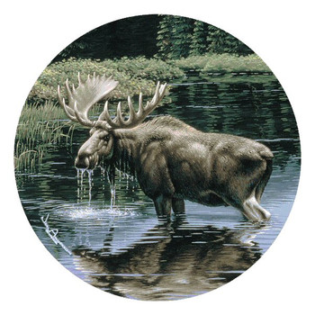 Moose in a Stream Round Beverage Coasters by Neal Anderson, Set of 8