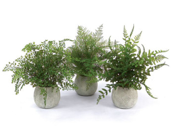 "14"" Artificial Plastic Potted Ferns, Set of 3"