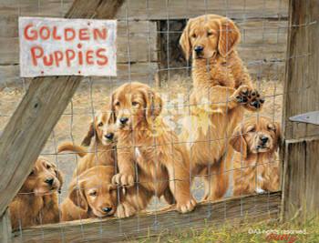 Golden Daze Golden Retriever Puppies Limited Edition Art Print Wall Art