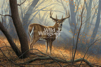 In His Prime Whitetail Deer Conservation Limited Edition Art Print Wall Art