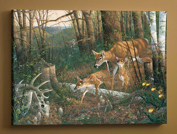 Oak Ridge Renewal Whitetail Deer Wrapped Canvas Giclee Art Print Wall Art