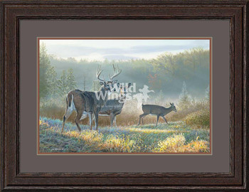 Deer Dreaming Whitetail Deer Framed Limited Edition Art Print Wall Art