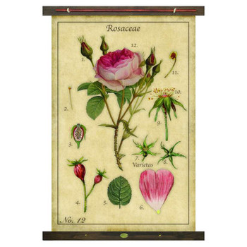 Custom Rose Rosaceae Canvas Tapestry