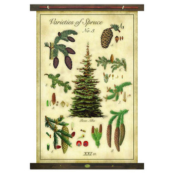 Custom Varieties of Spruce Trees Canvas Tapestry
