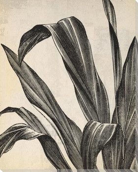 Botanical Etching IX Wrapped Canvas Giclee Art Print Wall Art