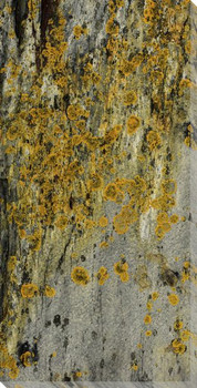 Lichen ON Rock Wrapped Canvas Giclee Art Print Wall Art