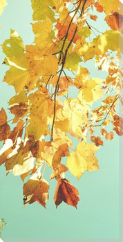 Leaves Against The Sky Wrapped Canvas Giclee Art Print Wall Art