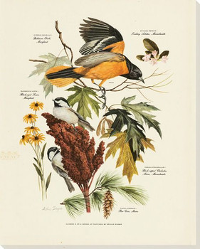 Baltimore Oriole Bird Wrapped Canvas Giclee Art Print Wall Art