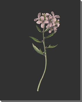 Delicate Botanical 6 Wrapped Canvas Giclee Art Print Wall Art