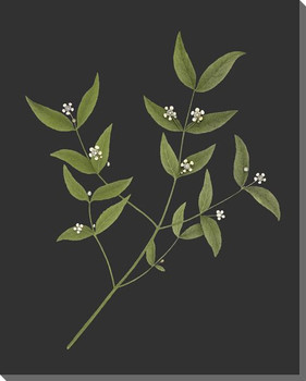 Delicate Botanical 5 Wrapped Canvas Giclee Art Print Wall Art