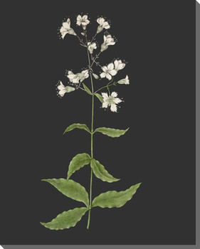 Delicate Botanical 4 Wrapped Canvas Giclee Art Print Wall Art