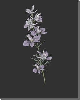 Delicate Botanical 2 Wrapped Canvas Giclee Art Print Wall Art