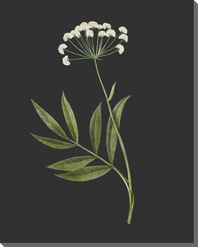 Delicate Botanical 1 Wrapped Canvas Giclee Art Print Wall Art