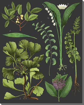Botanical Study Plants on Black Wrapped Canvas Giclee Art Print Wall Art