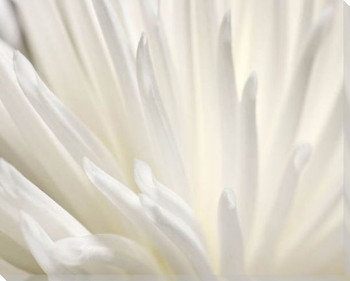 White Flower Wrapped Canvas Giclee Art Print Wall Art