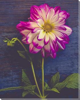 Single Flower Wrapped Canvas Giclee Art Print Wall Art