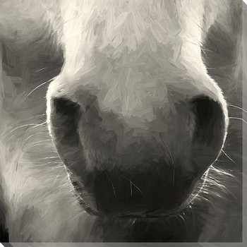 Horse Nose Wrapped Canvas Giclee Art Print Wall Art