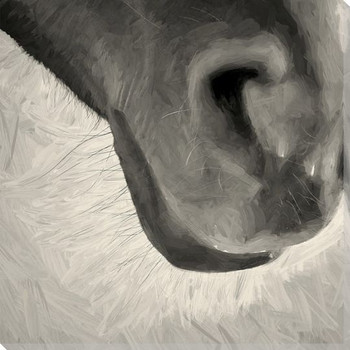 Horse Muzzle Wrapped Canvas Giclee Art Print Wall Art