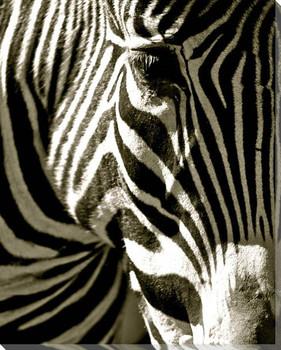 Zebra Head Wrapped Canvas Giclee Art Print Wall Art