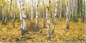 Autumn Birch Wrapped Canvas Giclee Art Print Wall Art