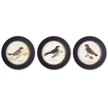 """9.5"""" Bird Art Prints Framed Wall Art, Set of 3"""