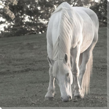 Divine White Horse Wrapped Canvas Giclee Art Print Wall Art