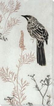 Wattlebird Hovering in My Garden Wrapped Canvas Giclee Art Print Wall Art