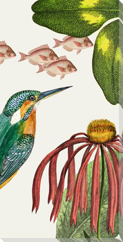 Artistry of Nature V Bird Wrapped Canvas Giclee Art Print Wall Art