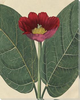 Botanical Beauty Peony Wrapped Canvas Giclee Art Print Wall Art